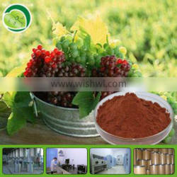 GMP supply Natural soluble grape seed extract