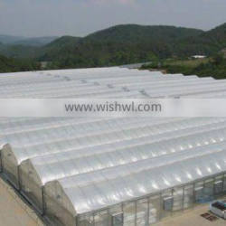 Multi span Poly Film Tunnel Greenhouse